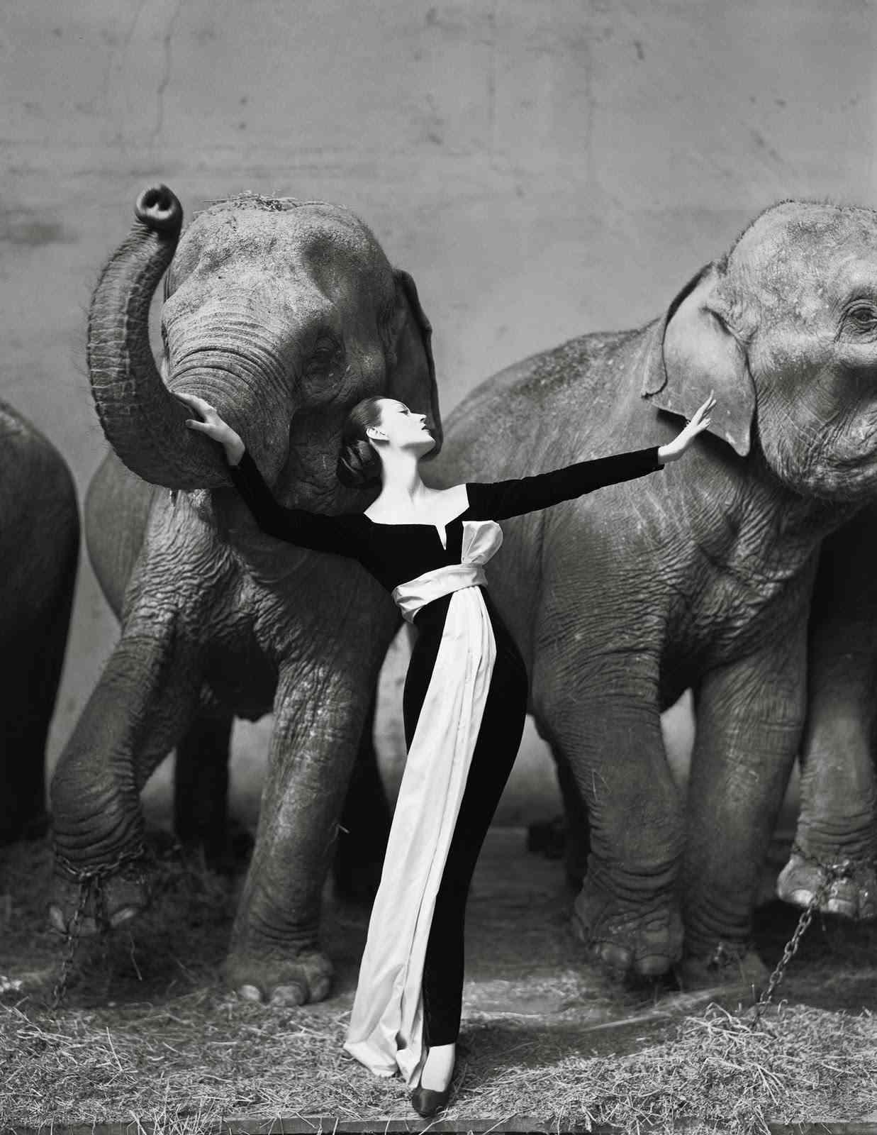 Richard Avedon moda